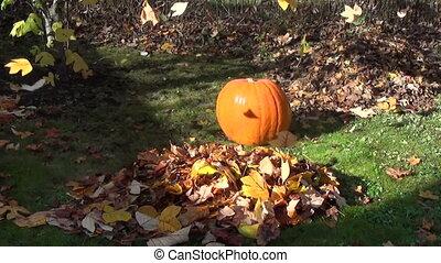 pumpkin garden leaf fall