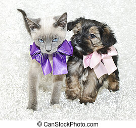 Cute Puppy and Kitten - Super cute kitten and puppy together...