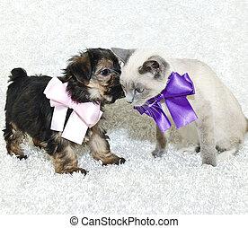 Cute Puppy Telling A Kitten Secrets - Puppy wispering in a...