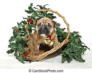 Christmas Puppy - Christmas Shar Pei puppy in a basket with...
