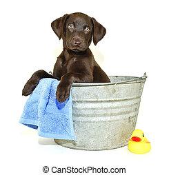 Lab Puppy Getting a Bath - Lab puppy sitting in a bath tub...