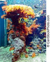 sea Invertebrates - Coral reef in aquarium