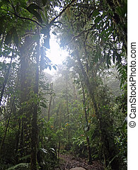 costa rica rainforest - summer in green paradise country...