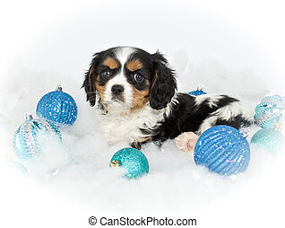 Christmas Puppy - A sweet King Cavalier puppy laying in snow...