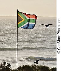 In the wind - Close up of South African flag and Seagulls