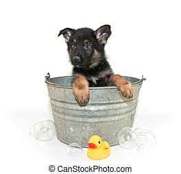 Bath Time - Sweet little puppy in a bath tub with bubbles...
