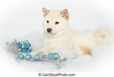 Christmas Puppy - Sweet Sheba inu puppy laying in snow with...
