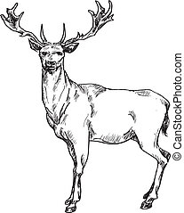 hand drawn deer illustration