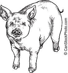 hand drawn pig illustration