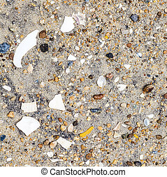 shells and stones at the beach - shells and stones at the...
