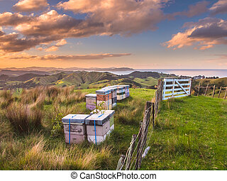 Colorful Bee Hives on Top of a Hill in Bay of Islands, New...