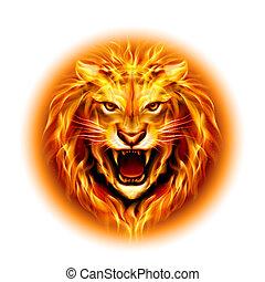 cabeça, fogo, Leão