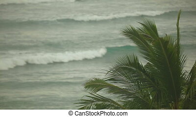 Palm leaves on a background of the Indian Ocean. Telephoto...