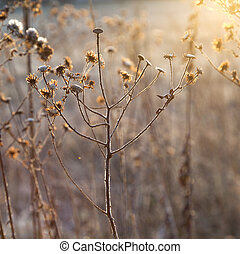 frozen plants in meadow with backlight in wintertime -...