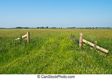 Spring in Dutch Countryside - Entrance to a Blooming pasture...