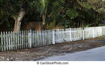 old picket fence - Long old picket fence with green mold.
