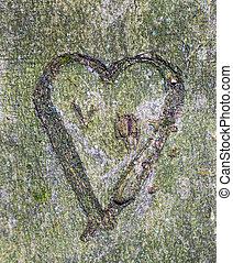 heart carved in tree in the wild forest