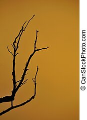 sunset on life - black dead branches silhouetted against...