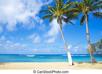 Coconut Palm tree with curfboard in Hawaii - Coconut Palm...