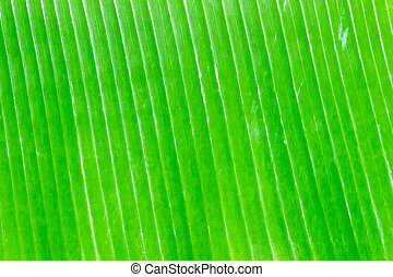Banana leaves background texture