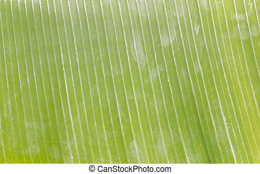 Banana leaves on wooden background