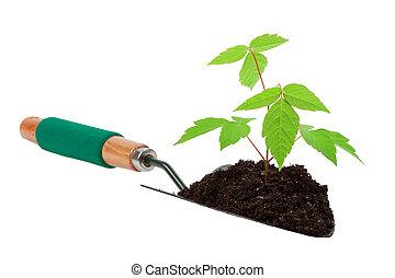 growth tree in gardening tool shovel land