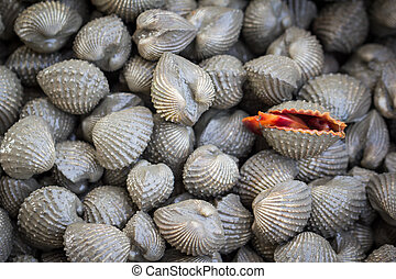 shellfish - Shellfish Blood Cockles market