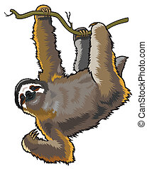 sloth - brown throeted three-toed sloth,bradypus...