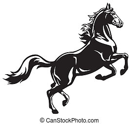 rearing horse black white - rearing horse, side view,black...