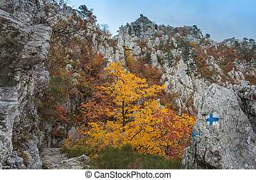 The Tasnei Gorge protected area in Baile Herculane, Romania