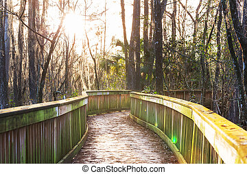 Boardwalk in swamp