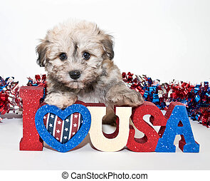 I Love America - A cute puppy sitting with a I love USA sign...