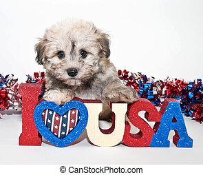 I Love America - A cute puppy sitting with a I love U.S.A....