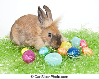 Easter Bunny - A cute bunny sitting in Easter grass with...