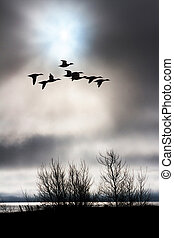 cloudy sky and flying duck