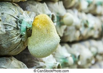 cabeça, macaco, cogumelo, fram, cima, fungos, fim, tailandia...