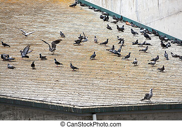 Flock of birds resting on a roof