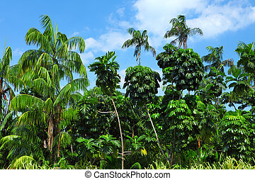 Coconut palm trees in forest