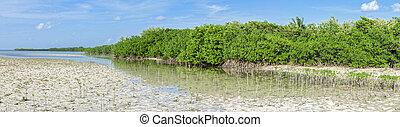 Mangrove lagoon panoramic - Beautiful panoramic view of...