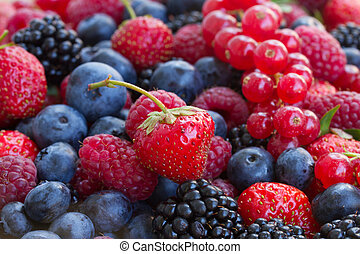 bluberry, raspberry, blackberry and red currrant colorful...