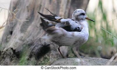 A bird cleaning itself