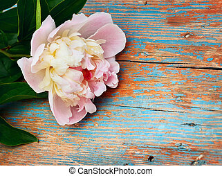 pink peony on old wooden background
