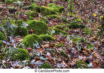 Moss on bolders in autumn - Moss on bolders and colorful...