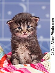 Sad kitten - Sad cute kitten in a warm knitted scarf over...