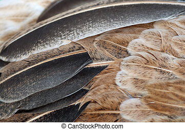 Macro feathers - Macro shot feathers of a brown chicken.