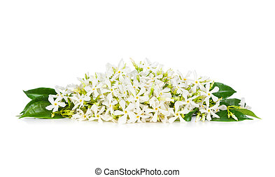 Jasmine flowers - Beautiful Jasmine flowers isolated on...