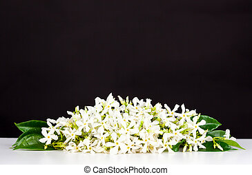 Jasmine flowers on white table and black background