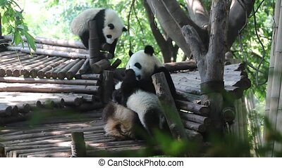 The mother panda and lovely baby panda together in the game