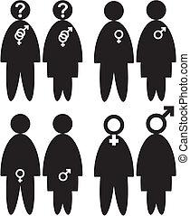 gender - sexual orientation