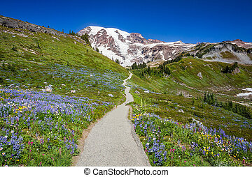 Trail to Mount Rainier - Mount Rainier hiking trail through...